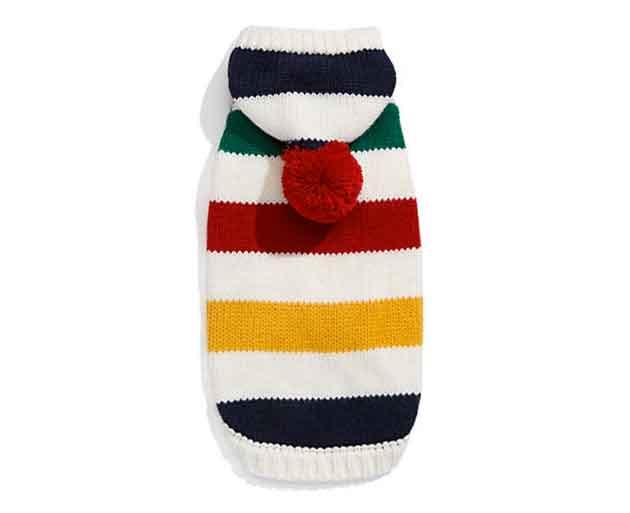 dog-sweater-the-bay
