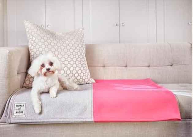 dog-blanket