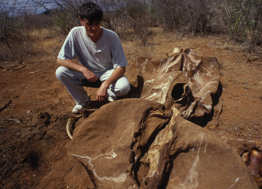 A distraught Allan Thornton crouches beside a poached elephant carcass in Tsavo East National Park, Kenya.