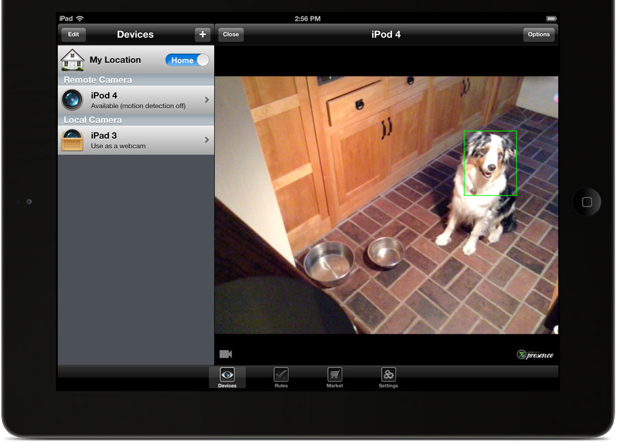 A photo of an iPad with the presence app pulled up. The camera is pointed at a dog sitting in the kitchen.