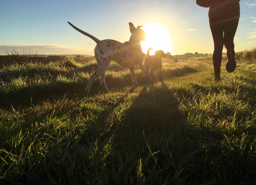 A woman runs through a field with two dogs with the sun rising on the horizon.