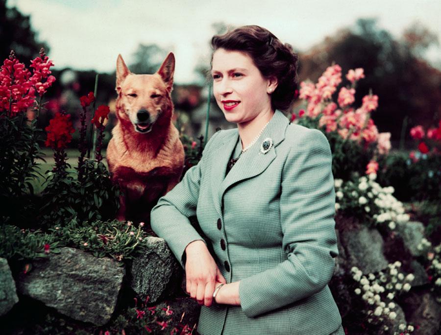 Queen Elizabeth & Corgis