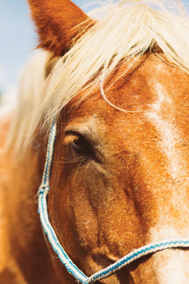 Yukon horseback riding