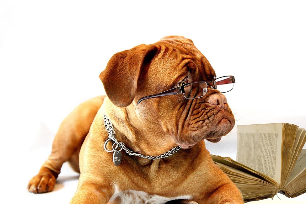 Dog wearing glasses beside book