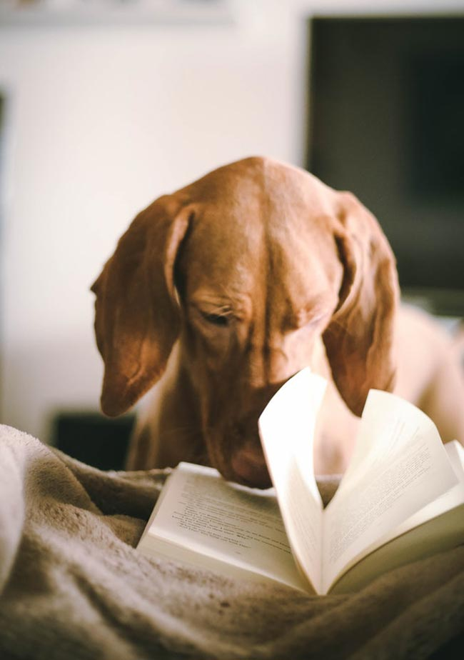 A dog reading a book