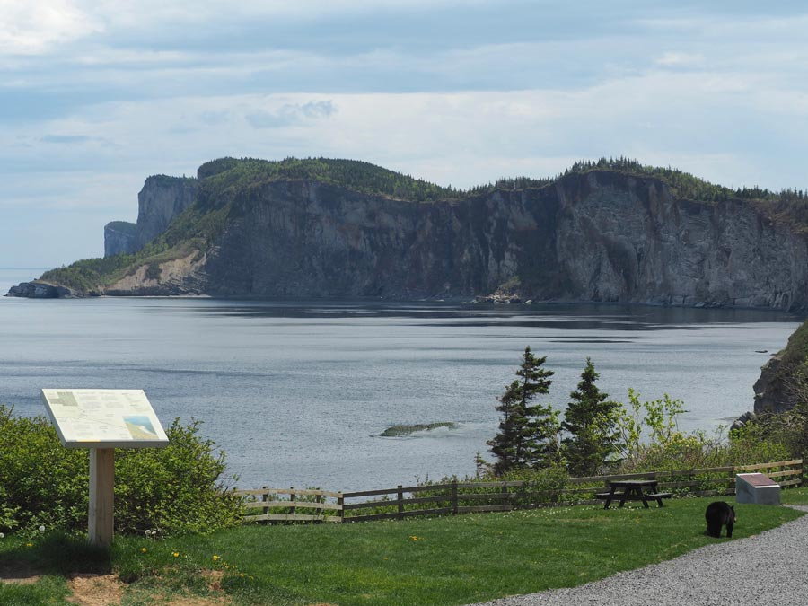 View of the cliffs where land meats ocean at Cap Bon Ami in Forillon National Park.