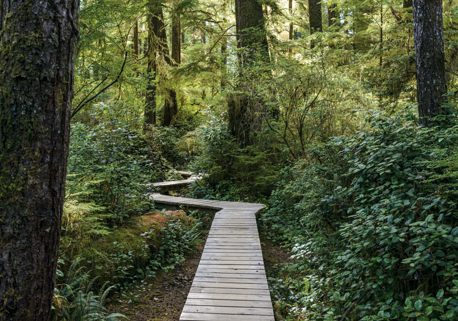 A wooden boardwalk path winding through a heavily wooded area.