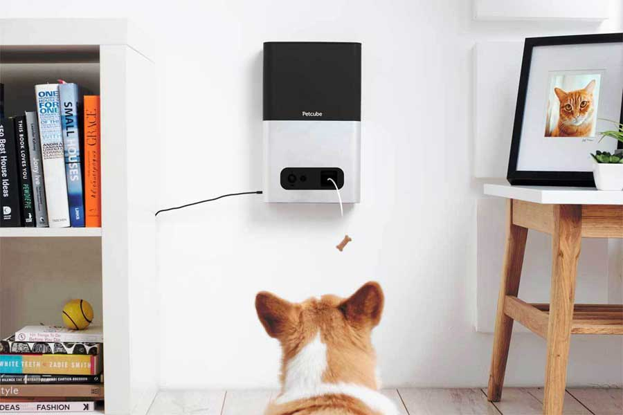 A dog facing a tablet like screen and treat dispenser mounted to the wall.