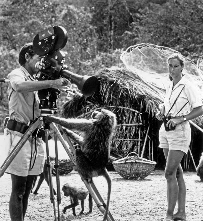 Goodall watching her photographer husband, Baron Hugo Von Lawick, adjust a camera with the help of a baboon in the Gombe Reserve, Africa.