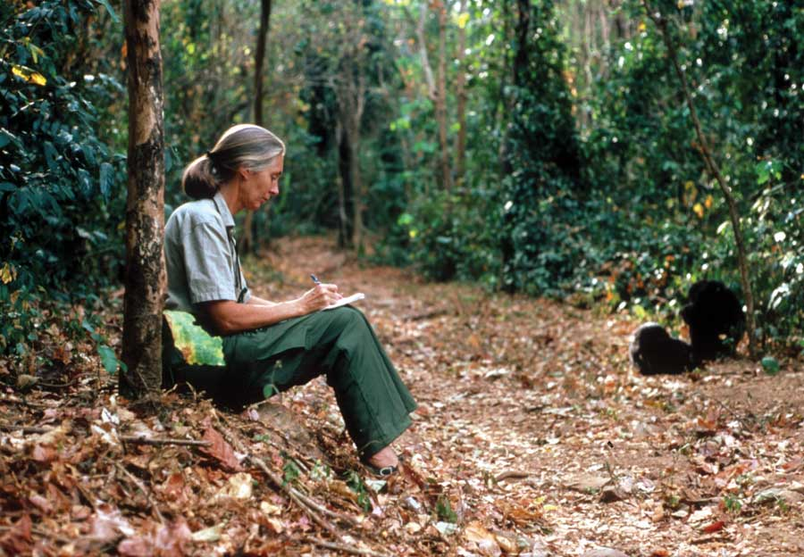 Jane Goodall sitting against a tree writing in a notebook as she observes apes.
