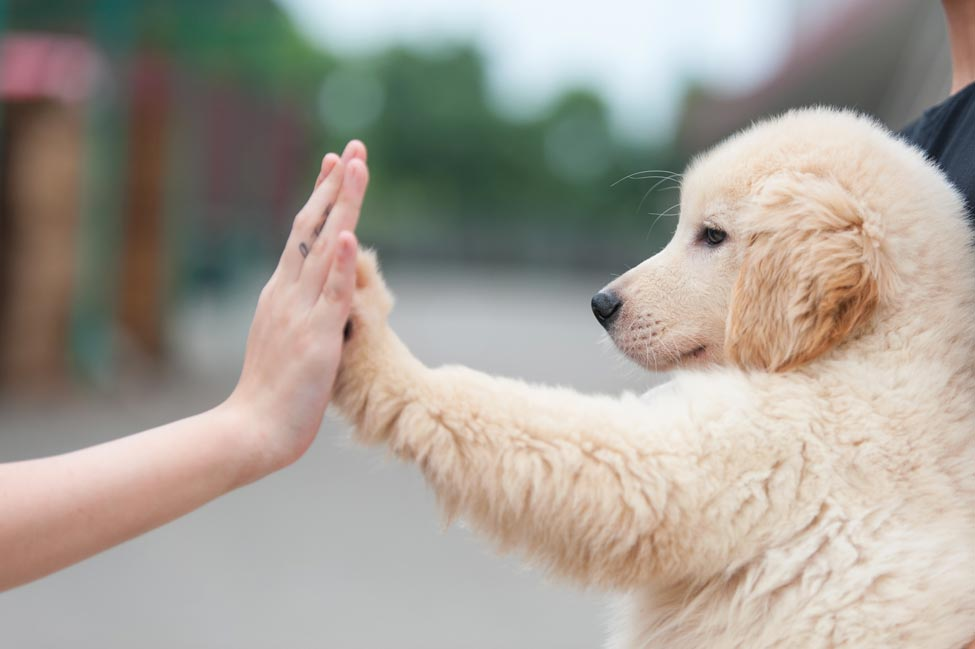 Dog holding hands with a person