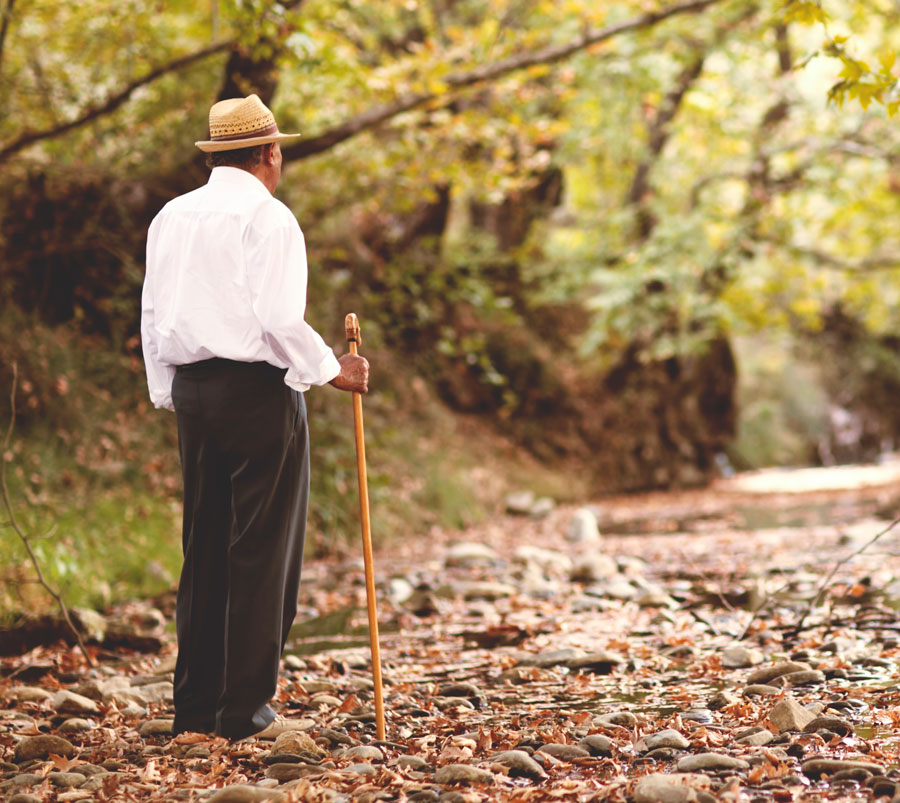 A man seen from behind walking a tree lined path