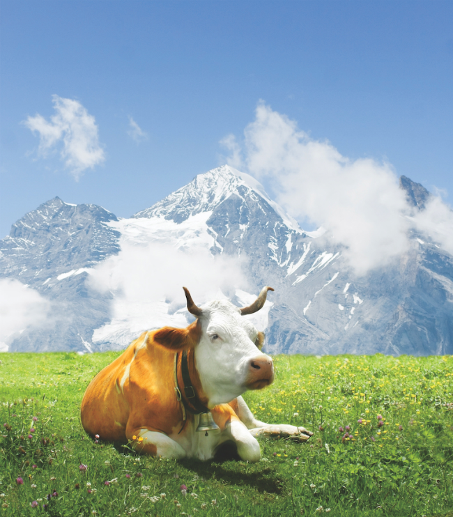 A photo of a spotted cow laying on the grass in front of a mountain.