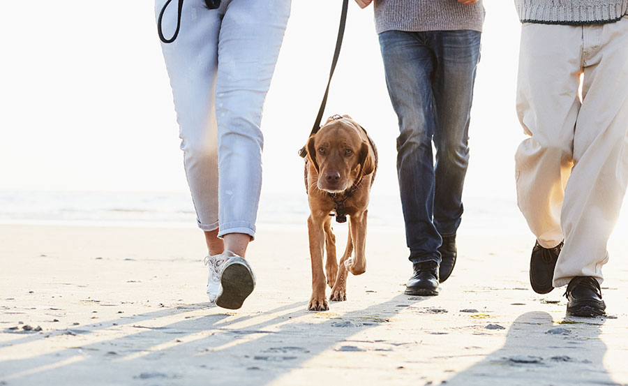 People, seen from the waist down, walking with a dog on the beach
