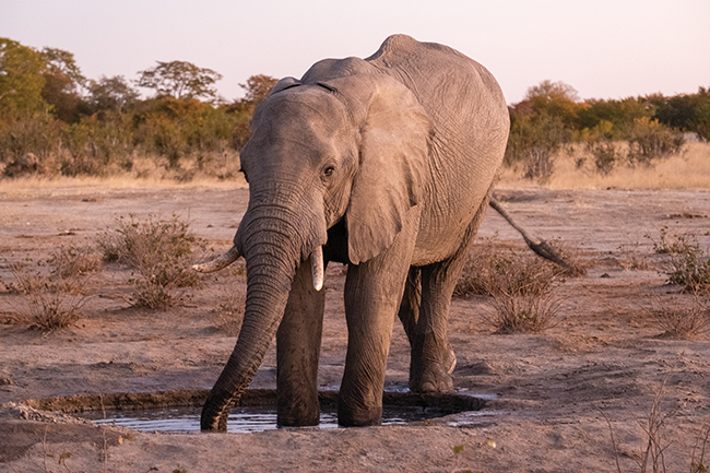 A photo of an elephant at a watering hole.