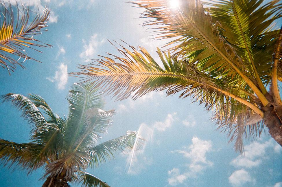 Florida, palmtrees, vacation home