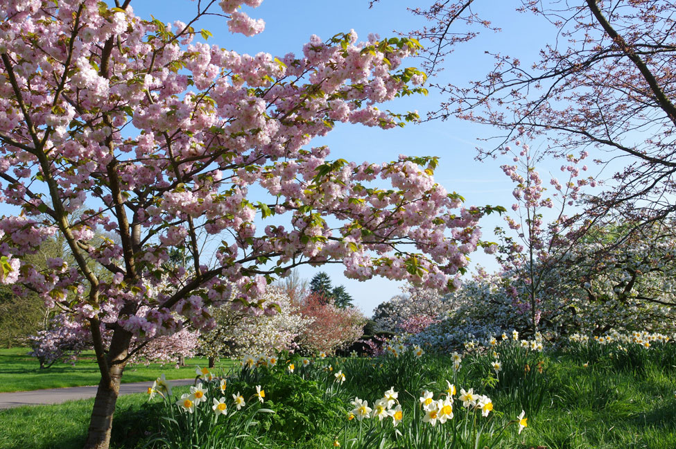 Kew in Spring 2020. Photo: Kew Gardens/Richard Wilford