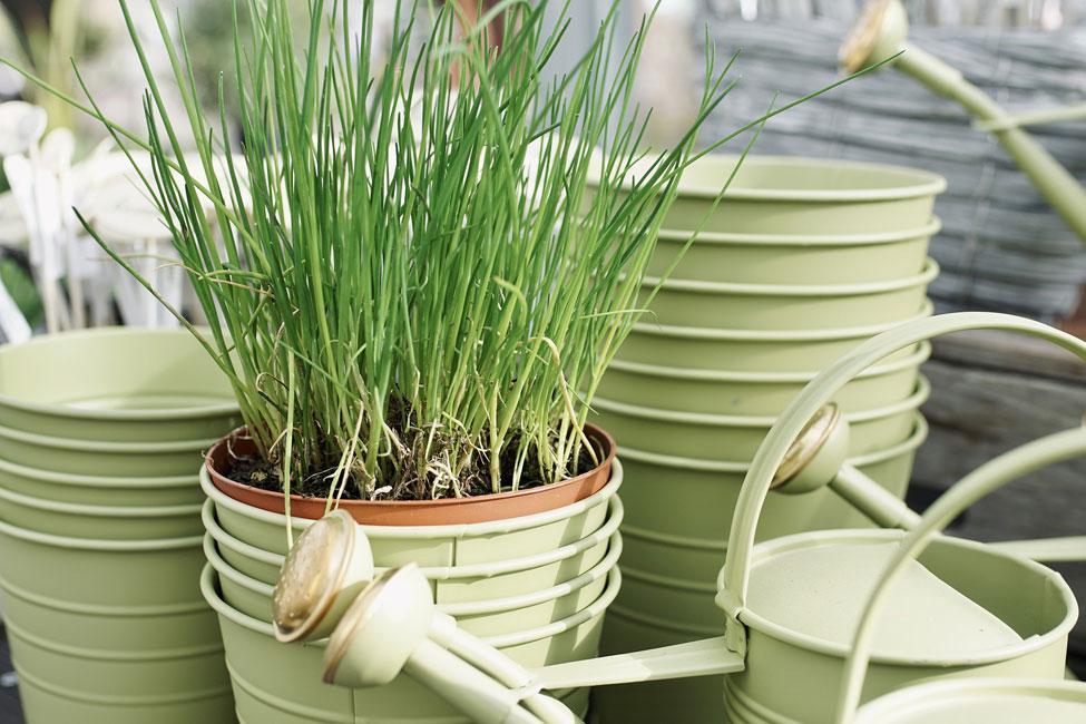 Gardening, plants
