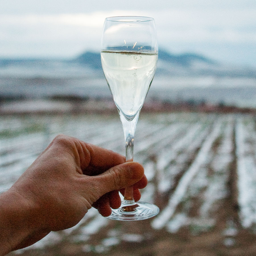 Man's hand holding a glass of ice wine up against a grape farm in the winter.