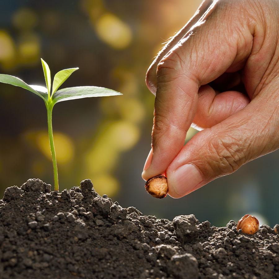 Seedkeeping