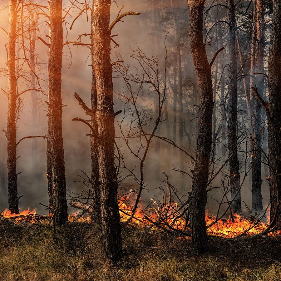 Indigenous Burning