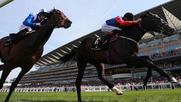 Royal Ascot Horses