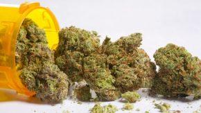 medicinal-pot