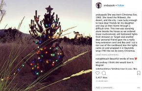 Christmas Tree In The Desert.Andy Spade Turns Tree In Desert To A Christmas Tree In