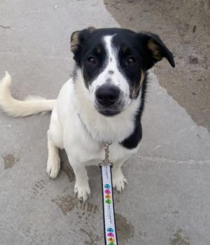 Zoomer Radio Pet of the Week: 10 month old Pepper