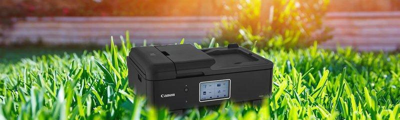 canon in grass
