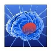 Brainstem Robotics