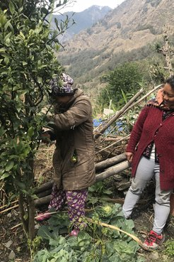 Two Nepali community members plant and prune orange trees