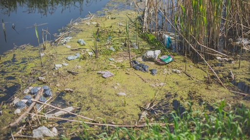 Lakes and rivers are too polluted to swim in