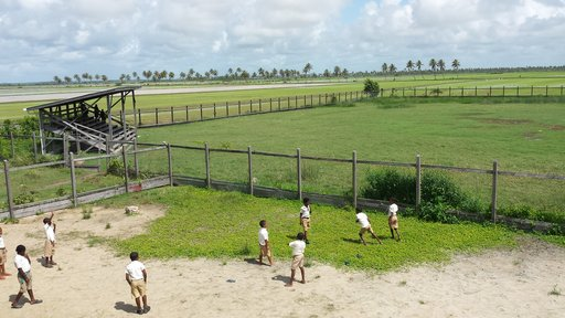 The school is bordered by seemingly endless rice fields.