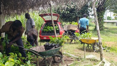 cocoa saplings are loaded into cars to be distributed throughout Logan's village
