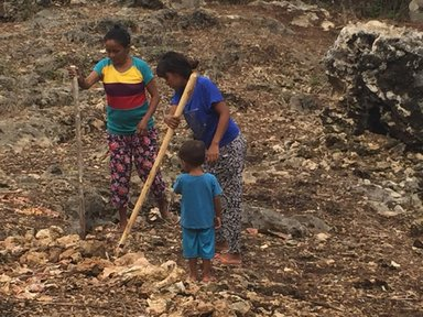 Two women use aisuaks (spears) to dig shallow holes anywhere there isn't a rock into which other women and girls will drop the six kernels.