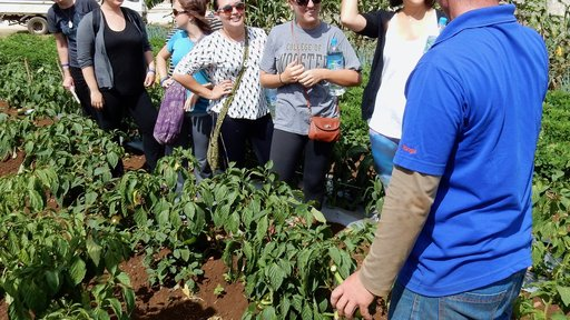 How to create a school garden, one veggie at a time