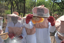 Feed the Future beekeeping project