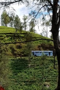 Bus on Tea Plantation