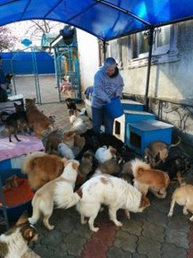 Deborah Sesek, a community development Volunteer, feeds dogs at an animal shelter where she volunteers.