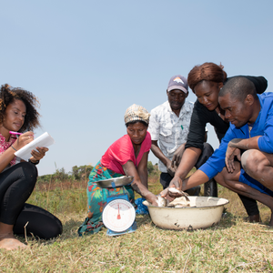 A black Peace Corps Volunteer kneels with a notebook in hand as four community members weigh fish. They are outside.