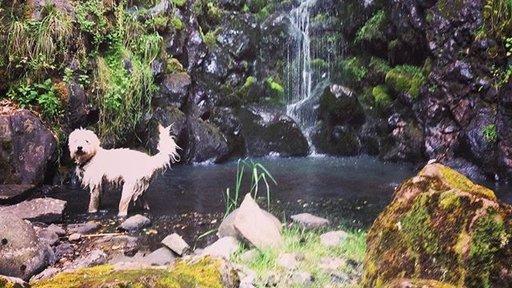 Henry waterfall