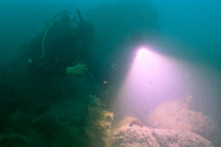 Doing the first dive survey and species inventory of the site with researchers.