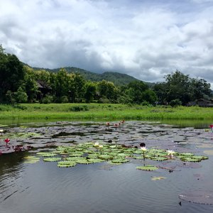 A lake filled with lily pads in Myanmar, green hills in the background.