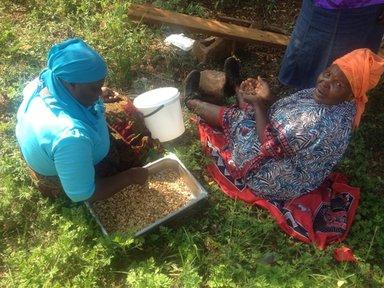 Swazi women peeling peanuts