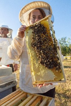 A women dressed in a beekeeper suit holds up a beehive frame swarming with bees