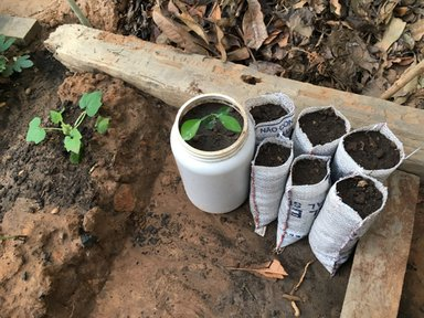 My small backyard tree nursery where I utilized part of a rice bag and an old protein powder container.