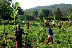 Form One students helped to plant banana seedlings