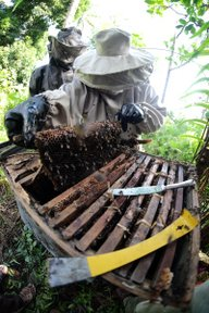 New beekeepers open a beehive for the first time.