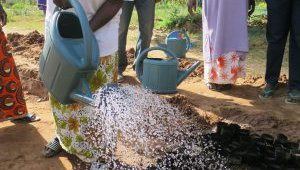 cashew production